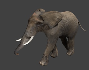 Elephant 3D model animated low-poly