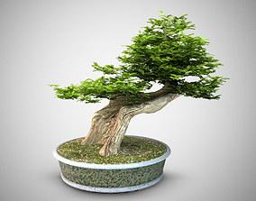 3D Bonsai tree to