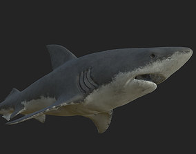 shark 3D scuba
