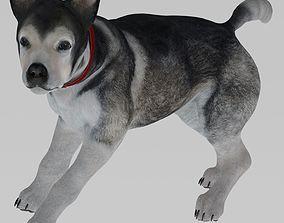 3D model Animal Dog