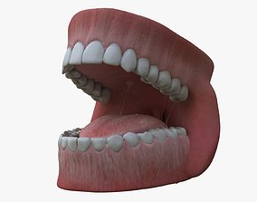 3D animated Teeth