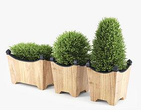3D plant BOXWOOD TOPIARY