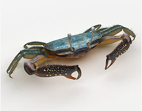 3D asset Short bodied crabs with big eyes