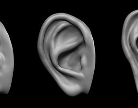 Free sample of 3 EARS with high poly and low poly 3D 1