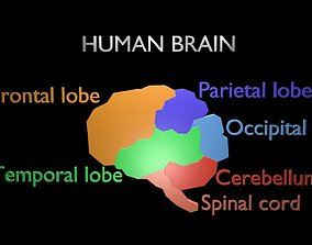 3D model Low poly brain symbol 32
