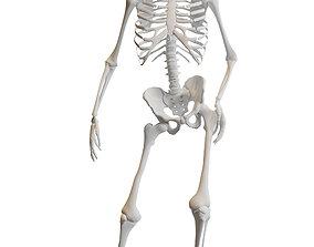 3D asset rigged game-ready thorax Human Skeleton