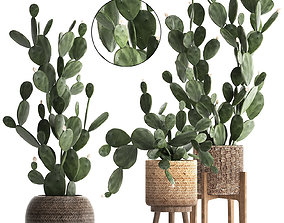3D Collection of Exotic Cactus Plants 397