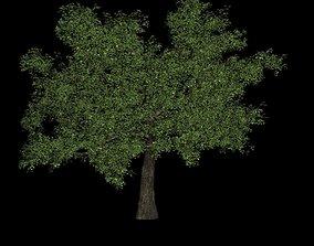 3D Tree green high poly flower