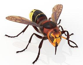 Hornet 3D asset animated