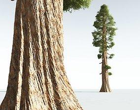 3D EVERYPlant Coastal Redwood 07 --12 Models--