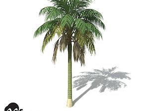3D model XfrogPlants Kentia Palm