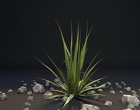 3D model Agave I Agave angustifolia angustifolia