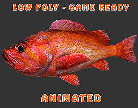 Low poly Red-Rock Fish Animated - Game 3D asset