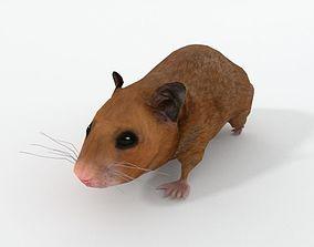 Syrian Hamster 3D asset