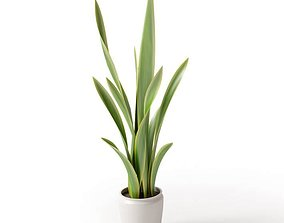 Long Leaf Potted Plant 3D model