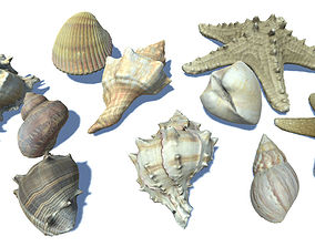 3D model Seashells and Starfishes Vol 3