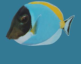3D model Ambly fish made using Blender 2 80