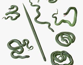 Green Snake - 3D Mesh game-ready