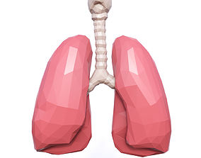 3D asset Lungs Low Poly