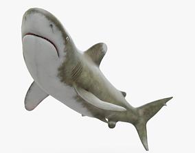 White Tip Shark 3D asset