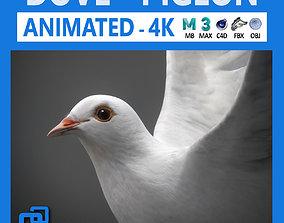 3D White Dove Animated
