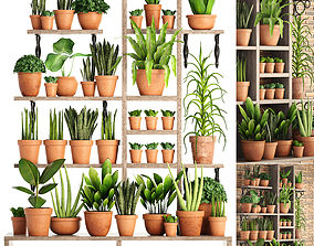Collection of plants in clay pots 3D model