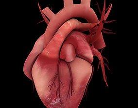 HUMAN HEARTS 3D MODEL realtime