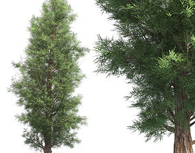 Eastern Red Cedar Tree 3D asset