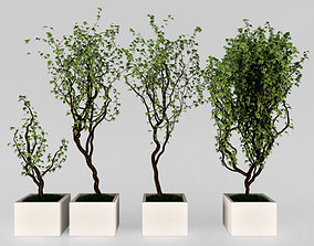 3D model Plant in the pot