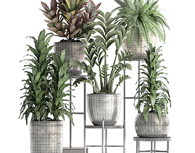 3D Collection Exotic plants 362