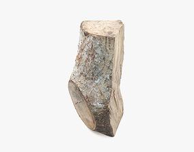 3D model Log Fraxinus