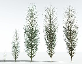 3D EVERYPlant Twisted Horsetail Tree EXT --24 Models--