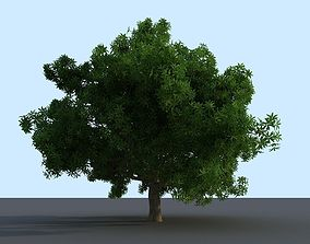 3D model Philippine Indian Mango Tree
