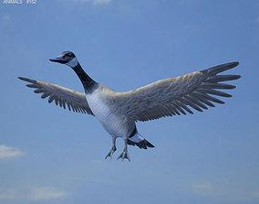 Canada Goose 3D