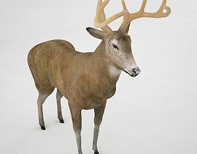 Buck 3D