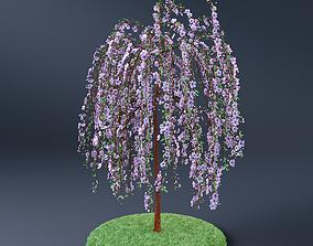 3D Blossom Cherry Tree