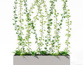 3D model partition plant ivy
