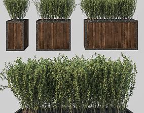 3D model Street bush in a box I