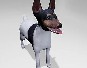 3D American Toy Fox Terrier