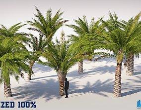 3D asset Palm Trees Set Optimized