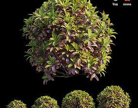 Croton plant set 10 3D
