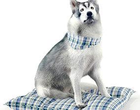 Husky Dog 3D asset