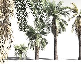 vegetation EVERYPlant Date Palm 02 -- 10 Models