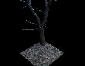 birch 3D model Big Tree