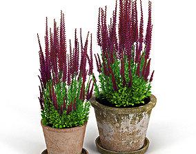 Red plant Calluna 3D model