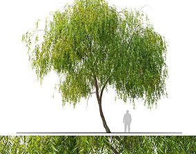 3D Weeping willow 3