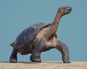 Lonely George the Galapagos Tortoise 3D model