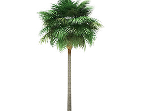 Sabal Palm Tree 3D Model 11m