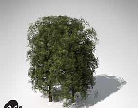 3D XfrogPlants False Cypress Hedges