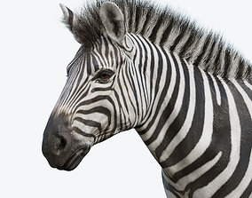 Zebra 3D asset game-ready